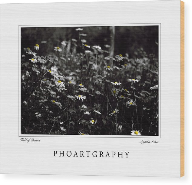 Flowers Wood Print featuring the photograph Field Of Daisies by Ayesha Lakes
