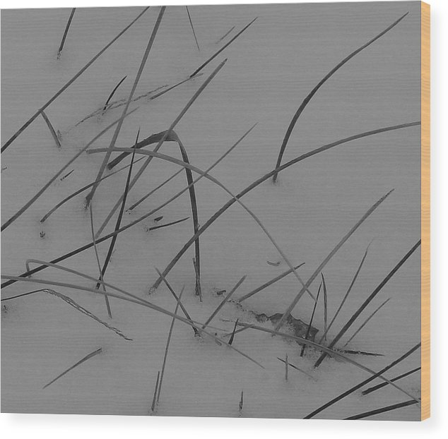 Wood Print featuring the photograph Winter Grass by Luciana Seymour