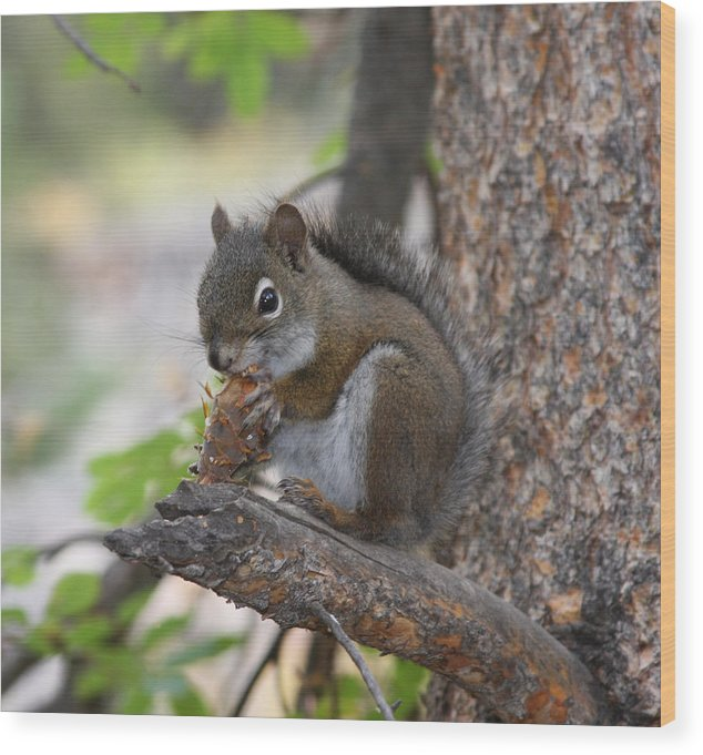 Squirrel Wood Print featuring the photograph Red Squirrel by Doug Johnson