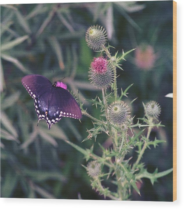 Butterfly Wood Print featuring the photograph 060207-13 by Mike Davis
