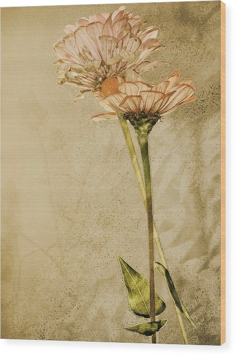 Flower Wood Print featuring the photograph Withered by Sally Engdahl