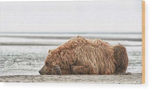 Michael Cummings Wood Print featuring the photograph Coastal Brown Bear Picture by Bear Images