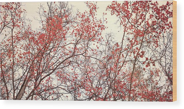 Red Wood Print featuring the photograph canopy trees II by Priska Wettstein