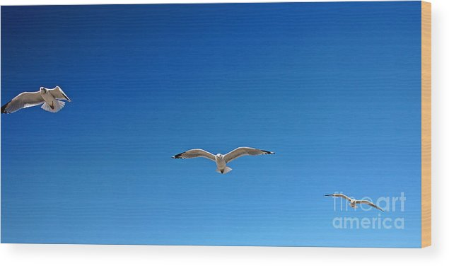 Seagulls Wood Print featuring the photograph Flight Pattern Vii Panoramic by Earl Johnson