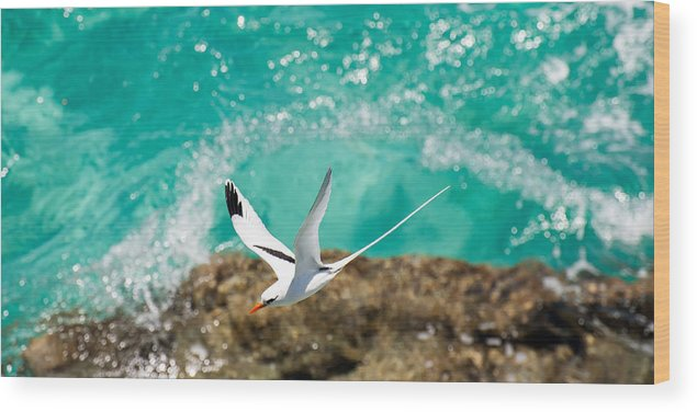 Bermuda Wood Print featuring the photograph Parting Waves by Ricardo Cardoso