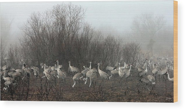 Sandhill Wood Print featuring the photograph Sandhill Cranes In The Fog by Farol Tomson
