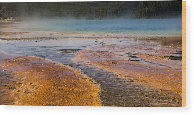Grand Prismatic Spring Wood Print featuring the photograph Color Of Life by Chad Davis