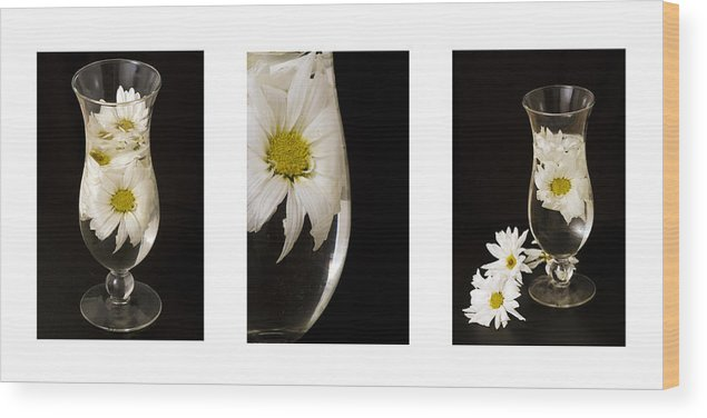 Flowers Wood Print featuring the photograph Daisy Triptych by Ayesha Lakes