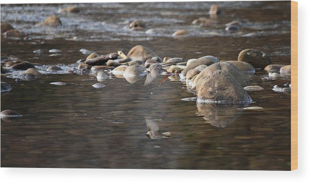 Flycatcher Wood Print featuring the photograph Flycatcher Hunting On The Buffalo River by Michael Dougherty