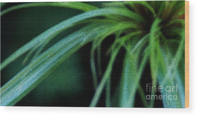 Grass Wood Print featuring the photograph Grass Dance by Linda Shafer
