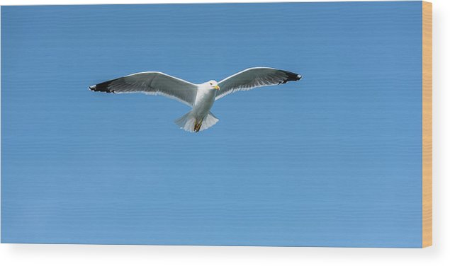 Seagull Wood Print featuring the photograph Look by Nicola Simeoni