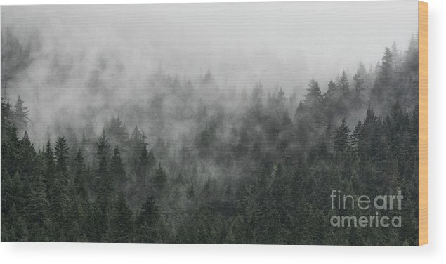 Canada Wood Print featuring the photograph Mystic Forest V by Brad Allen Fine Art