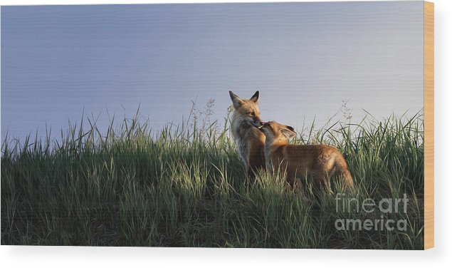 Allenfoto Wood Print featuring the photograph Red Fox Morning by Brad Allen Fine Art