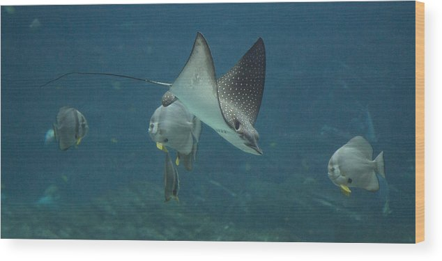 Shark Wood Print featuring the photograph Tranquil Sea Creatures by Betsy Knapp