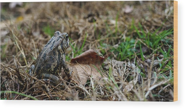 Frog Wood Print featuring the photograph Where To by Mecoes Florance