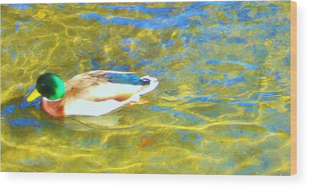 Water Wood Print featuring the photograph Mallard Duck by Marilyn Diaz