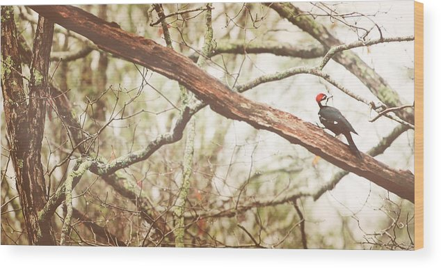 Pileated Woodpecker Wood Print featuring the photograph Resting by Kathleen Stevens Moore