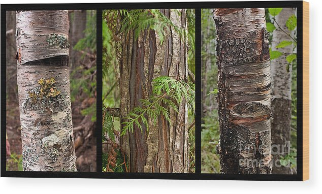 Tree Wear By Nature Wood Print featuring the photograph Tree Wear By Nature by Sandi Mikuse