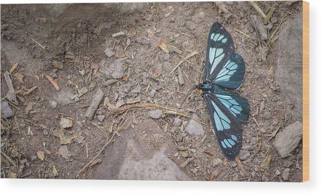 Butterfly Wood Print featuring the photograph Contrast by Livia Pavelescu