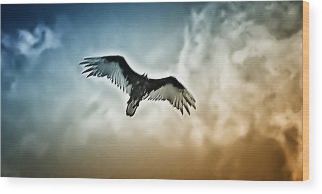Falcon Wood Print featuring the photograph Flying Falcon by Bill Cannon