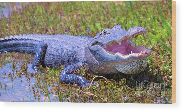 Alligator Wood Print featuring the photograph Gator Laugh by David Call