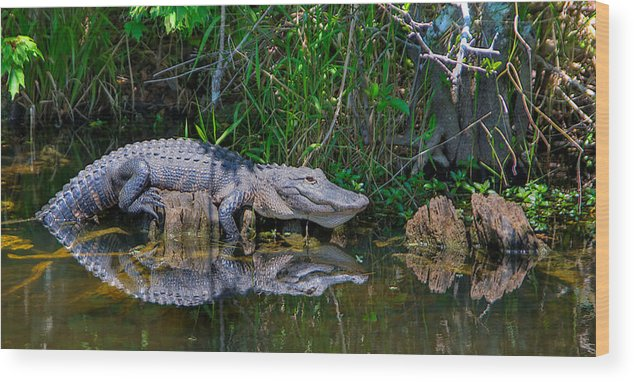Wood Print featuring the photograph Happy Gator by William Wetmore