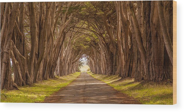 California Wood Print featuring the photograph Valiant Trees by Kevin Dietrich