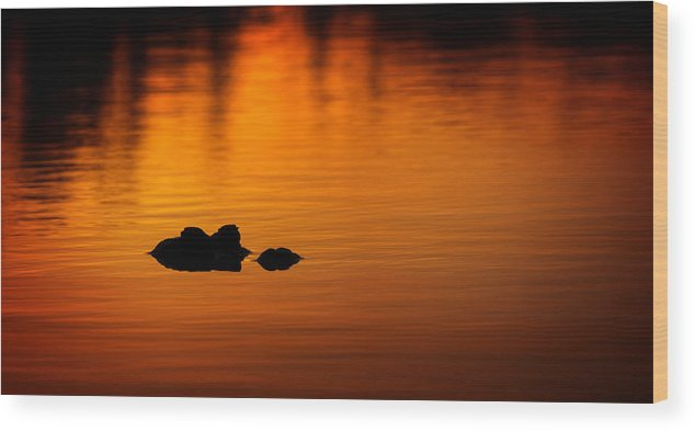 Alligator Wood Print featuring the photograph Alligator Dusk by Mark Andrew Thomas