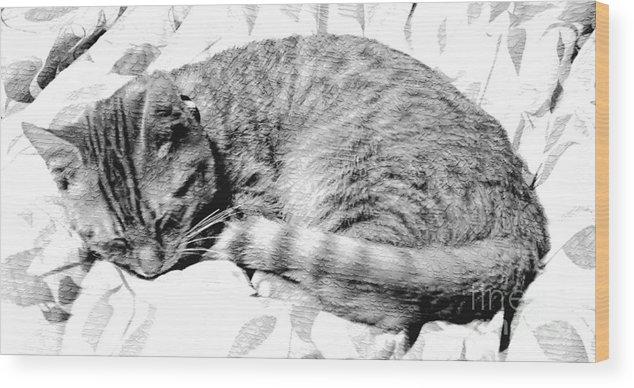 Sleeping Kitten Wood Print featuring the photograph Sleepy Kitty by Lilliana Mendez