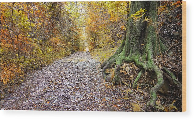 Path Wood Print featuring the photograph The Path by Des Jacobs