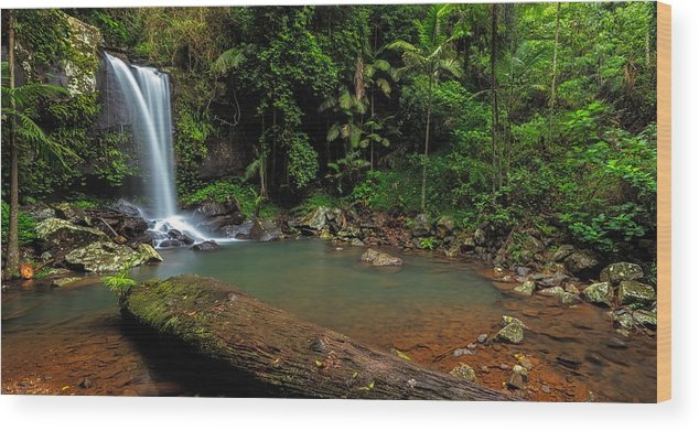 Panorama Wood Print featuring the photograph Curtis Falls - Mt Tamborine by Mark Lucey