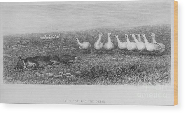 19th Century Wood Print featuring the photograph Fox & Geese, 19th Century by Granger