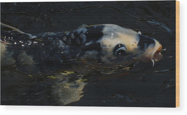 Koi Wood Print featuring the photograph Koi by Jean Booth