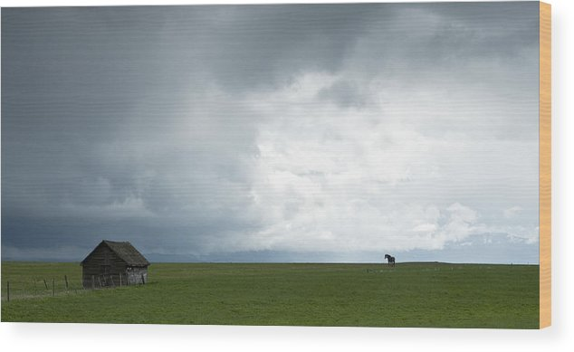 Rain Wood Print featuring the photograph Lonely Mare by Peter Olsen