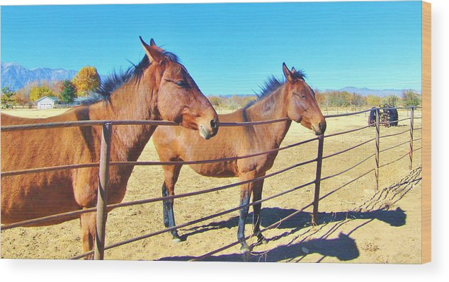 Sky Wood Print featuring the photograph Mule Talk by Marilyn Diaz