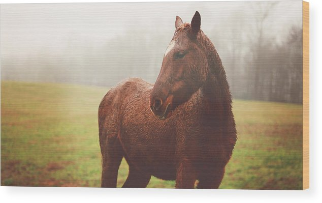 Horse Wood Print featuring the photograph A Quiet Beauty by Kathleen Stevens Moore