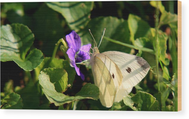 Butterfly Wood Print featuring the photograph Butterfly At Flower by David Dufresne
