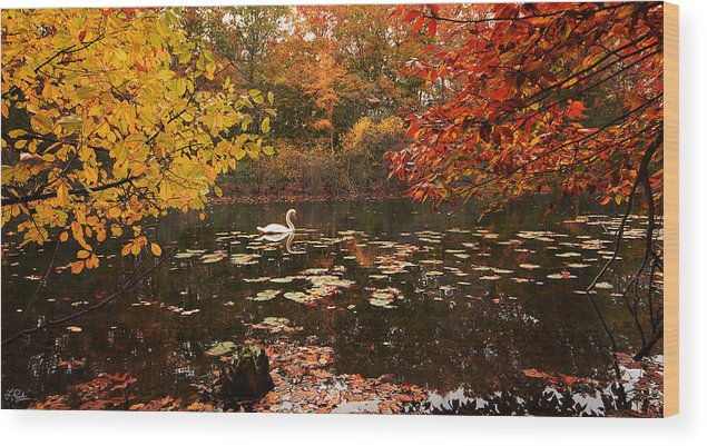 Rhode Island Wood Print featuring the photograph Delightful Autumn by Lourry Legarde