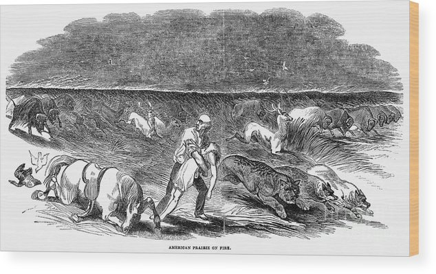 1844 Wood Print featuring the photograph Prairie Fire, 1844 by Granger