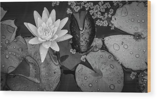 Lily Pad Wood Print featuring the photograph 4475- Lily Pads Black And White by David Lange