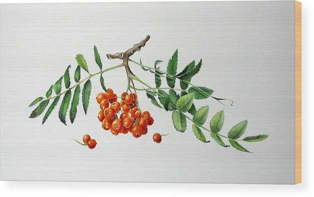 Tree Wood Print featuring the painting Mountain Ash With Berries by Margit Sampogna