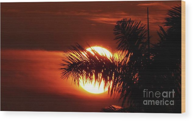 Sunset Wood Print featuring the photograph Palm Sunset by Carlos Amaro