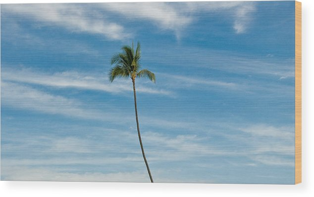 Blue Sky Wood Print featuring the photograph Palm Tree And Clouds by Rich Iwasaki