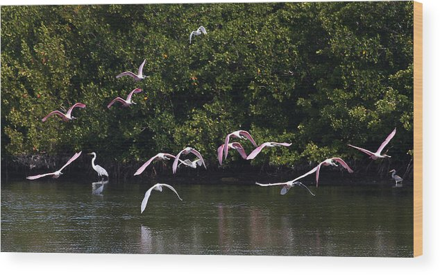 Flight Wood Print featuring the photograph Roseates Takeoff From Sanibel by John Rowe