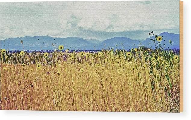 Fields Wood Print featuring the photograph Sunflower Field 2 by Steve Ohlsen