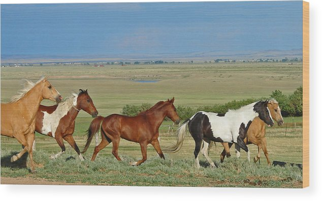 Herd Wood Print featuring the photograph Wild Horses Wyoming by Heather Coen