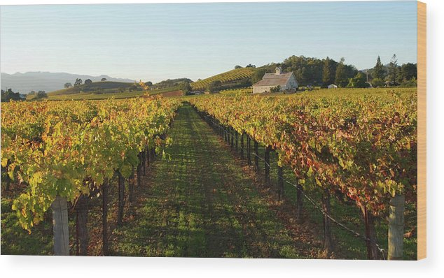 Scenics Wood Print featuring the photograph Napa Valley Vineyard In Autumn by Leezsnow