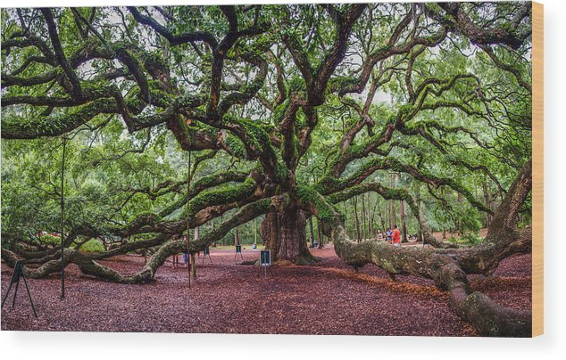 Angel Wood Print featuring the photograph Angel Oak by Jeff Ortakales