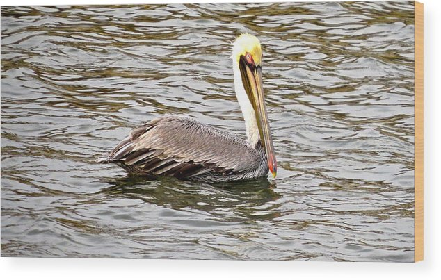 Brown Pelican Wood Print featuring the photograph Brown Pelican1 by Michael Anthony