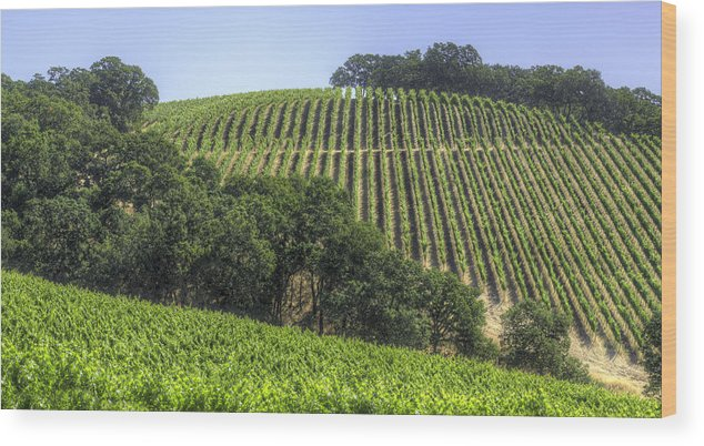 Howell Mountain Wood Print featuring the photograph Howell Mountain Vineyards by Mark Harrington